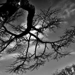 動かざる命~彫刻の森美術館16